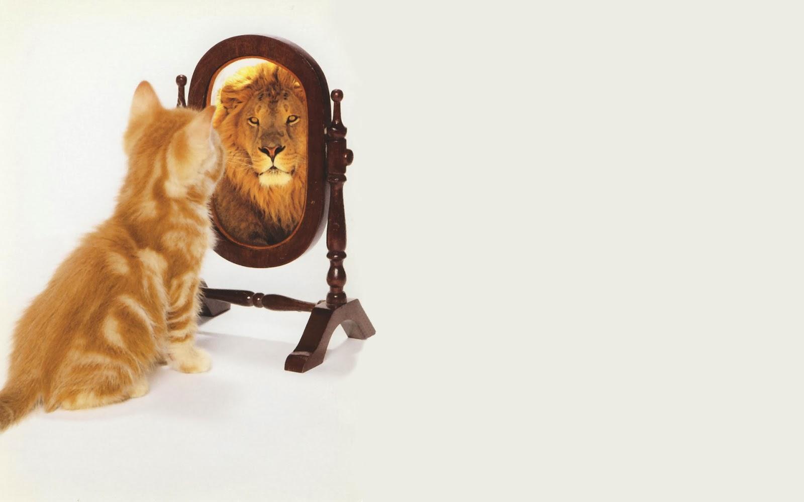 kedi, aslan, ayna, ego, narsizm