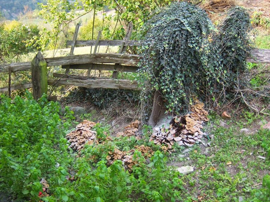 Grupo de setas de camino a la fuente en madera muerta.