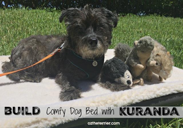 oz on kuranda standard dog bed you build yourself
