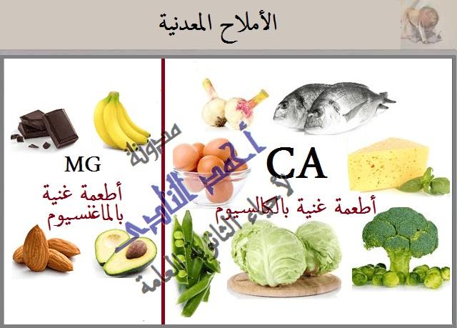 التغذية غير الذاتية - الأملاح المعدنية - مدونة أحمد النادى لأحياء الثانوية العامة