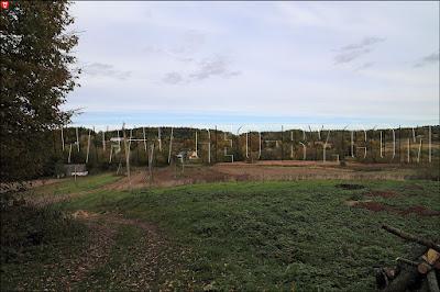 Вид на деревню Романы