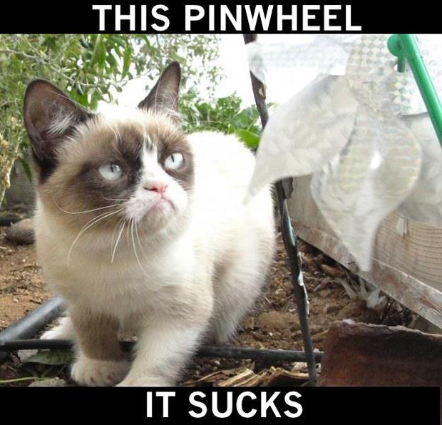 Quokka Grumpy Cat
