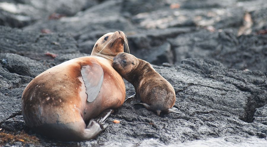 14. Mom protects her baby Seal by alessandro giovanelli