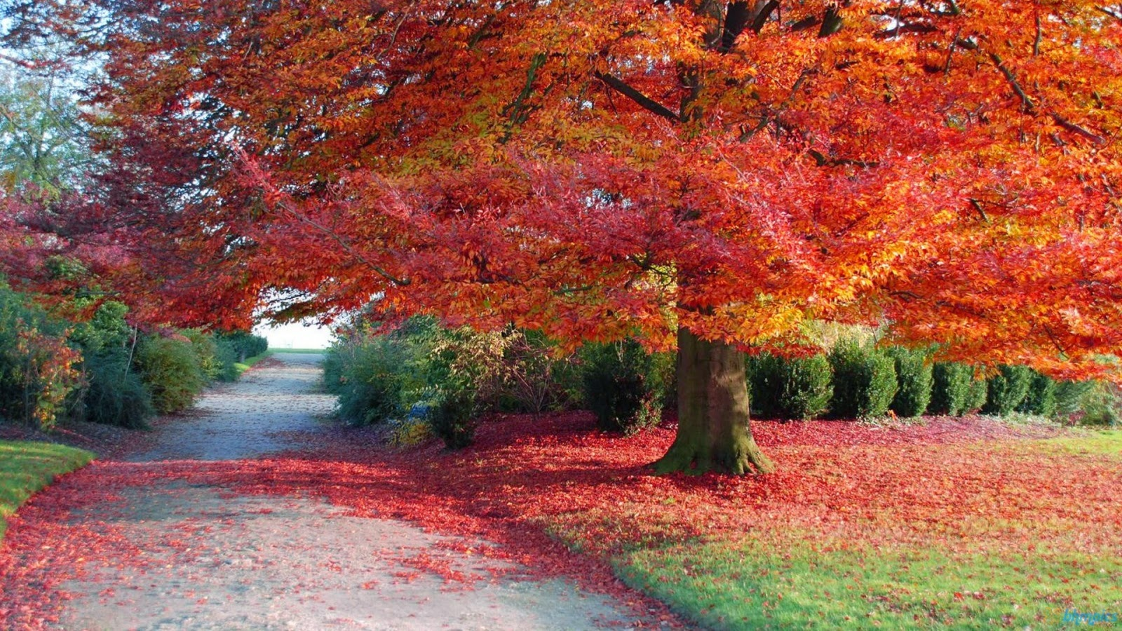 Autumn Season in Pakistan - The Falling Season - Autumn Wallpapers