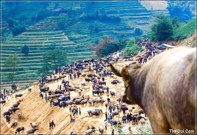 chợ Cấn Cấu Lào Cai