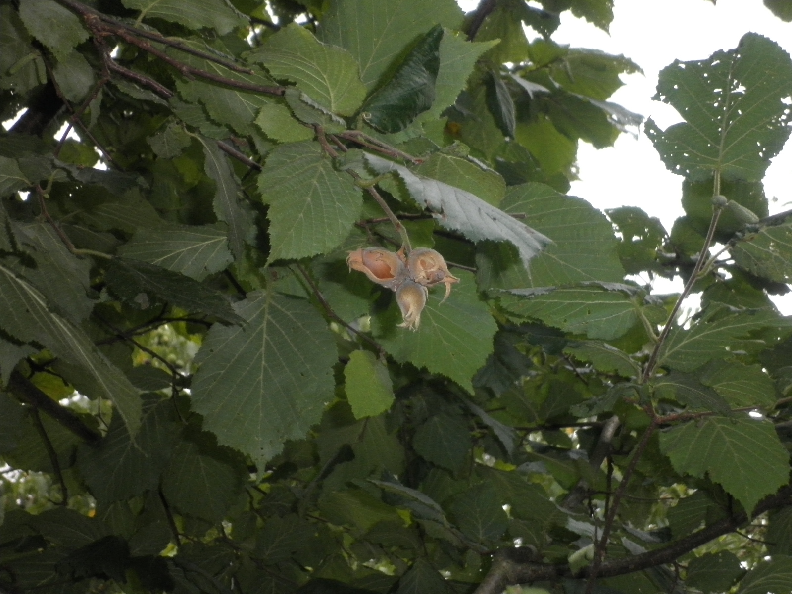 this that by pasqualina garden in august garten im august giardino in agosto. Black Bedroom Furniture Sets. Home Design Ideas