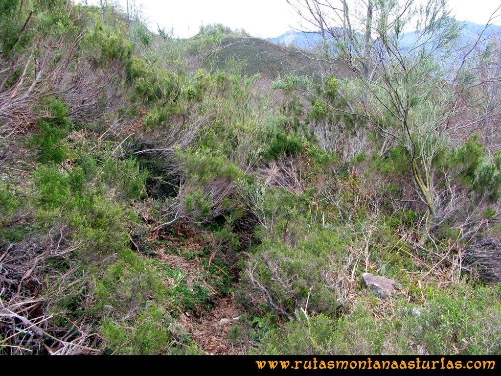 Ruta Peña Redonda: Camino prácticamente cerrado por la vegetación