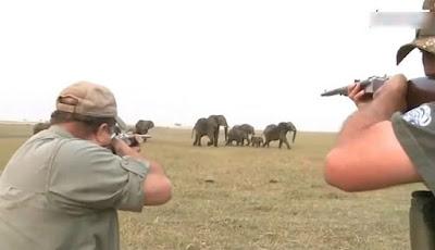 Dua pemburu sedang menembak gajah.