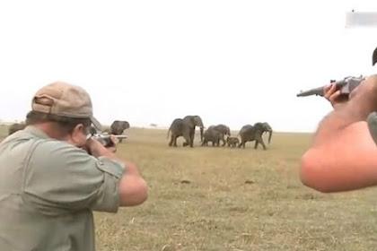 Video Viral, Pemburu Gajah: Tembak di Antara Matanya