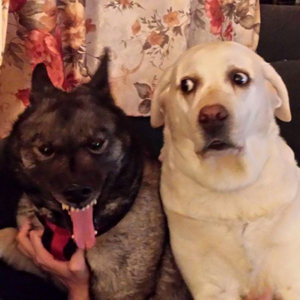 Cute dogs - part 175, best cute dog images, funny dog pictures
