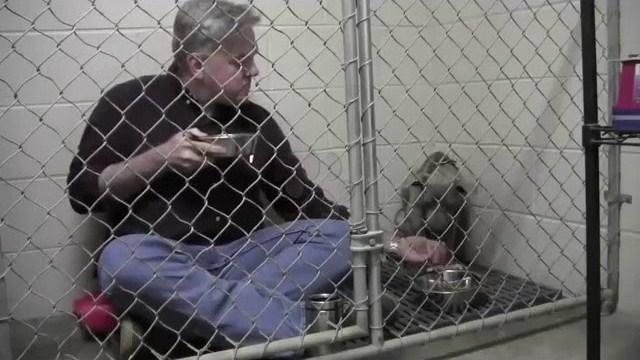 Veterinario desayuna dentro del canil de una Pitbull moribunda y en pánico para salvarle la vida