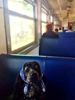 Dog hides on train