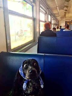 Dog hides on train