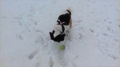 Video of Harry in Snow