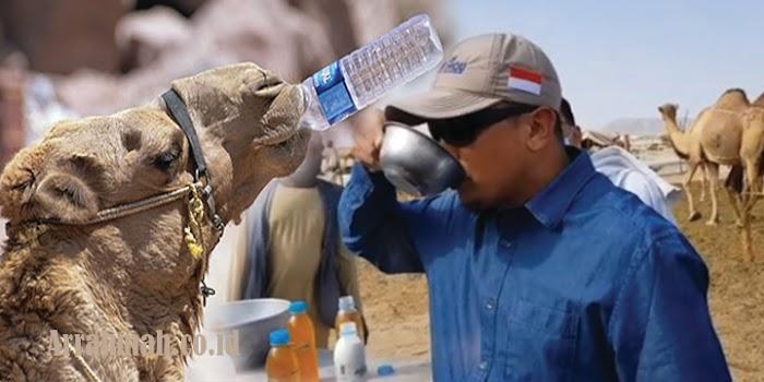 Bolehkan Meminum Air Kencing Unta Untuk Obat? Para Ulama....