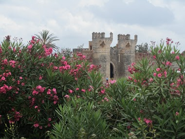 Travel To The Valley of Roses in Morocco