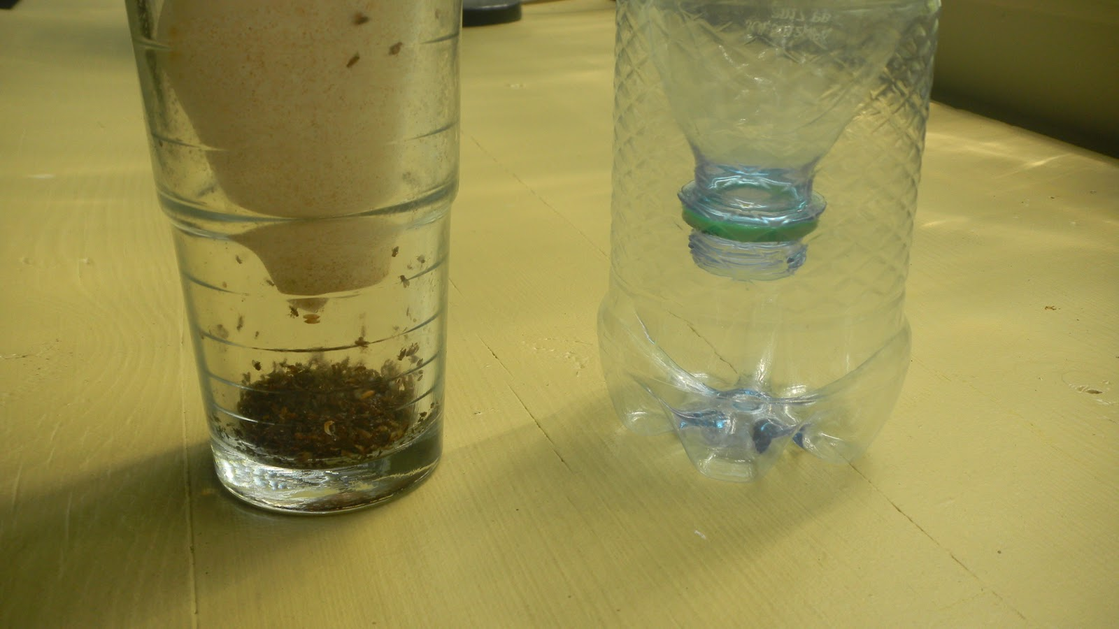 Green Roof Growers: Upgraded Fruit Fly Trap