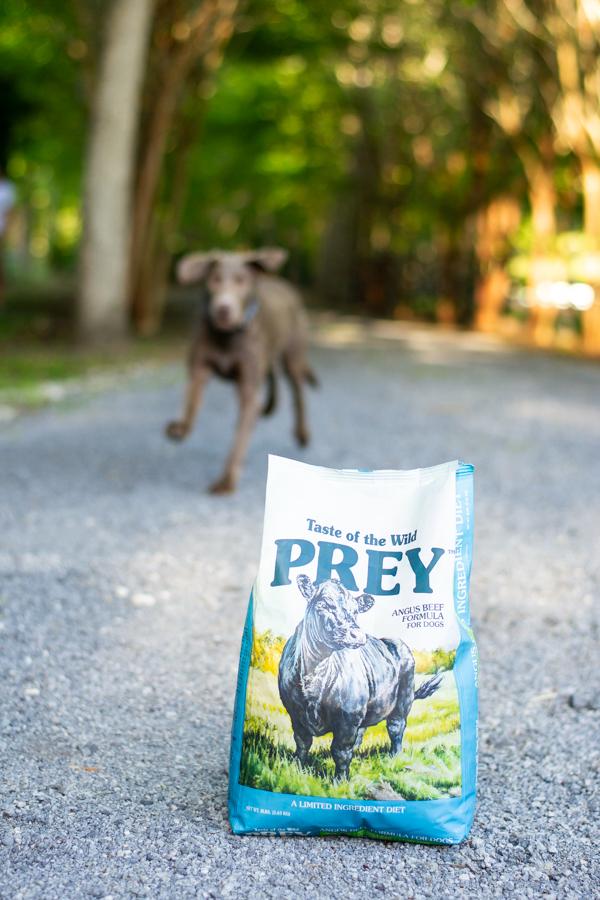Taste of the Wild PREY - Chasing Cinderella
