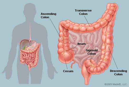 The Arts, Sciences and Medicine: Colon Cancer Energetics