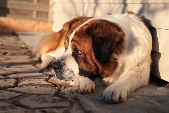 Jak długo żyją psy?