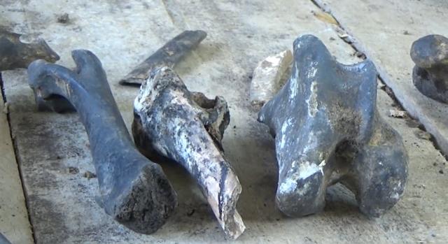 Tim Ahli Teliti Temuan Fosil Di Goa Tenggar