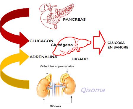 Las Biomoleculas de la Energia. | Qisoma