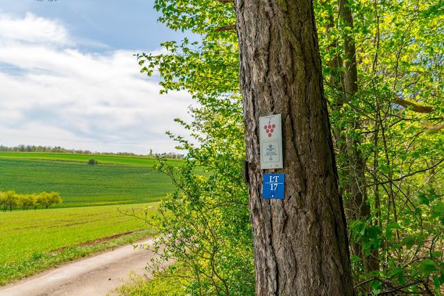 LT 17 Kur und Wein | Wandern in Bad Mergentheim | Liebliches Taubertal Weinlehrpfad Markelsheim | Wanderung um Bad Mergentheim 12