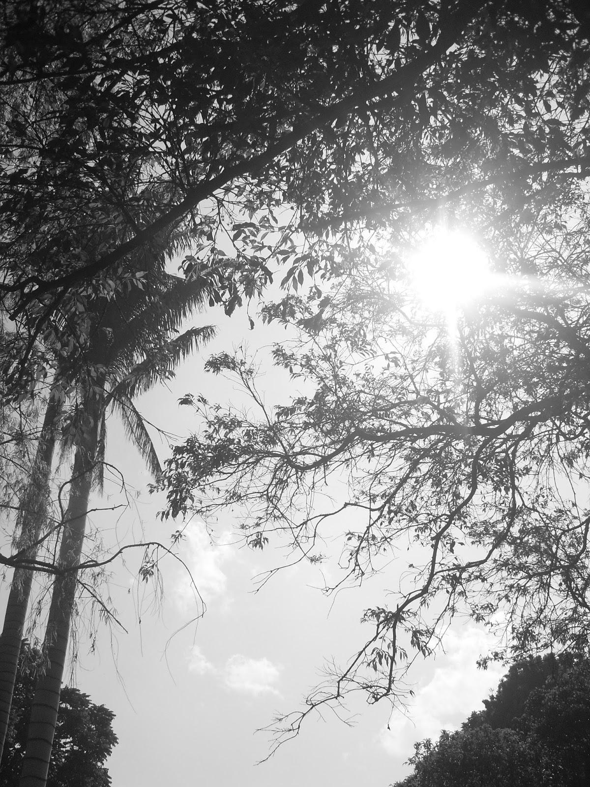 Imago y jard n bot nico en blanco y negro 2016 for Calendario jardin botanico 2016