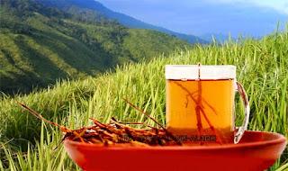 Image daftar obat herbal wasir paling ampuh di apotik