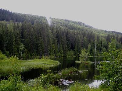 http://gryningensepok.wixsite.com/kanalisering/naturens-visdom