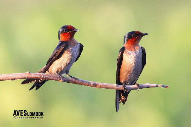http://www.aveslombok.com/2016/09/3-tips-for-bird-photography.html