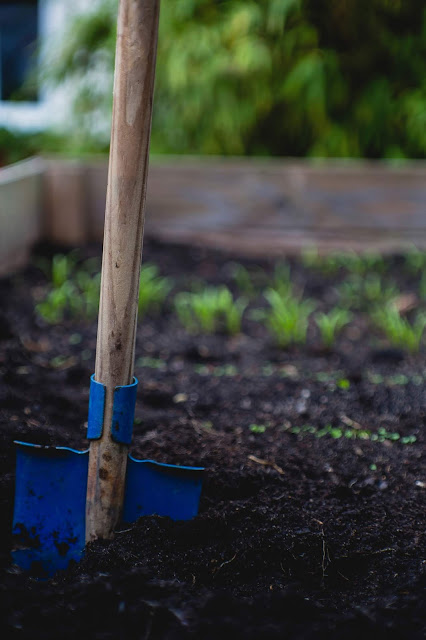 Wooden handled blue spade in a flowerbed with small plants in the background
