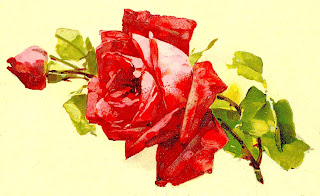 rose flower digital artwork clipart image download
