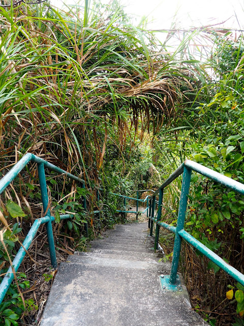 Stairs into the forest foliage, off Bowen Road walking trail, Hong Kong