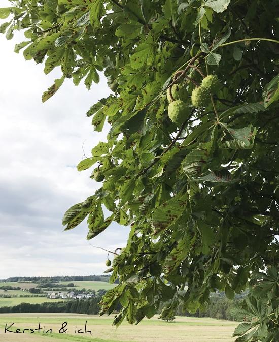 Landschaftsbild Herbst Kastanienbaum Hunsrück