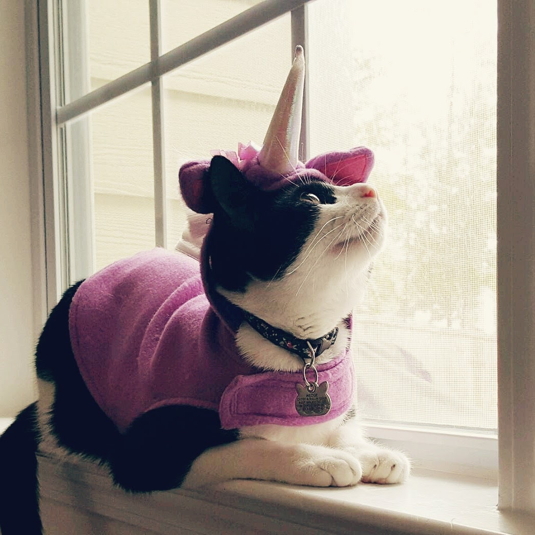 wedge cat tuxedo black white unicorn outfit costume