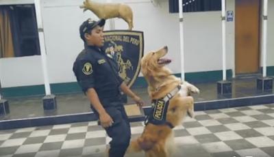 """Policía de Peru y el video del escuadrón canino a ritmo de """"Scooby Doo PaPa"""""""