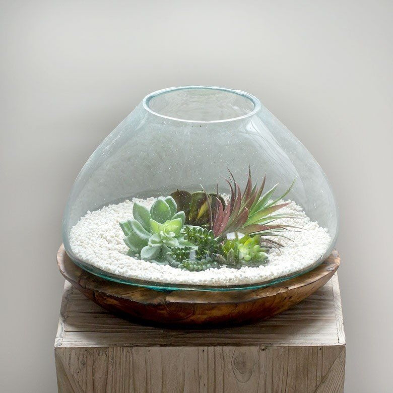 Fish Bowl with Plant on Top Image