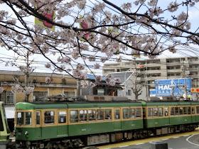 江ノ電と桜