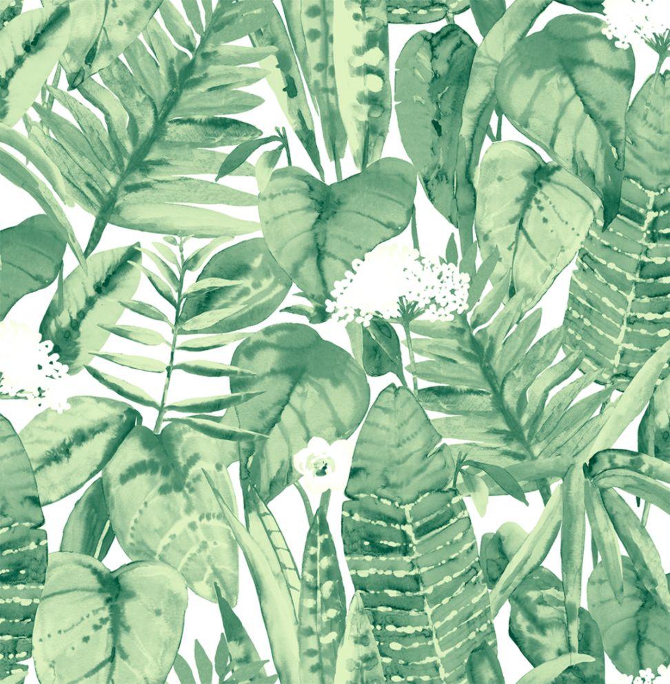 Jungle Wallpaper Wallpapers Warrior
