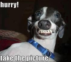 Funny Dog Humor : Take the photo #doghumor