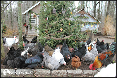 Chicken yard Christmas Tree.