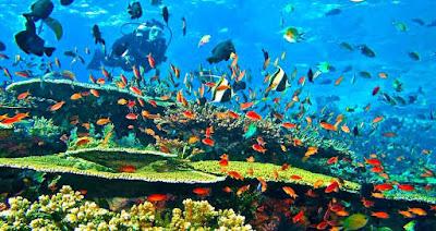 Diving dan Snorkeling