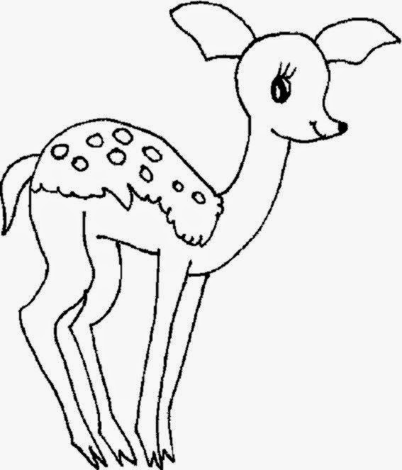 Free Printable Deer Coloring Pages For Kids | 663x567