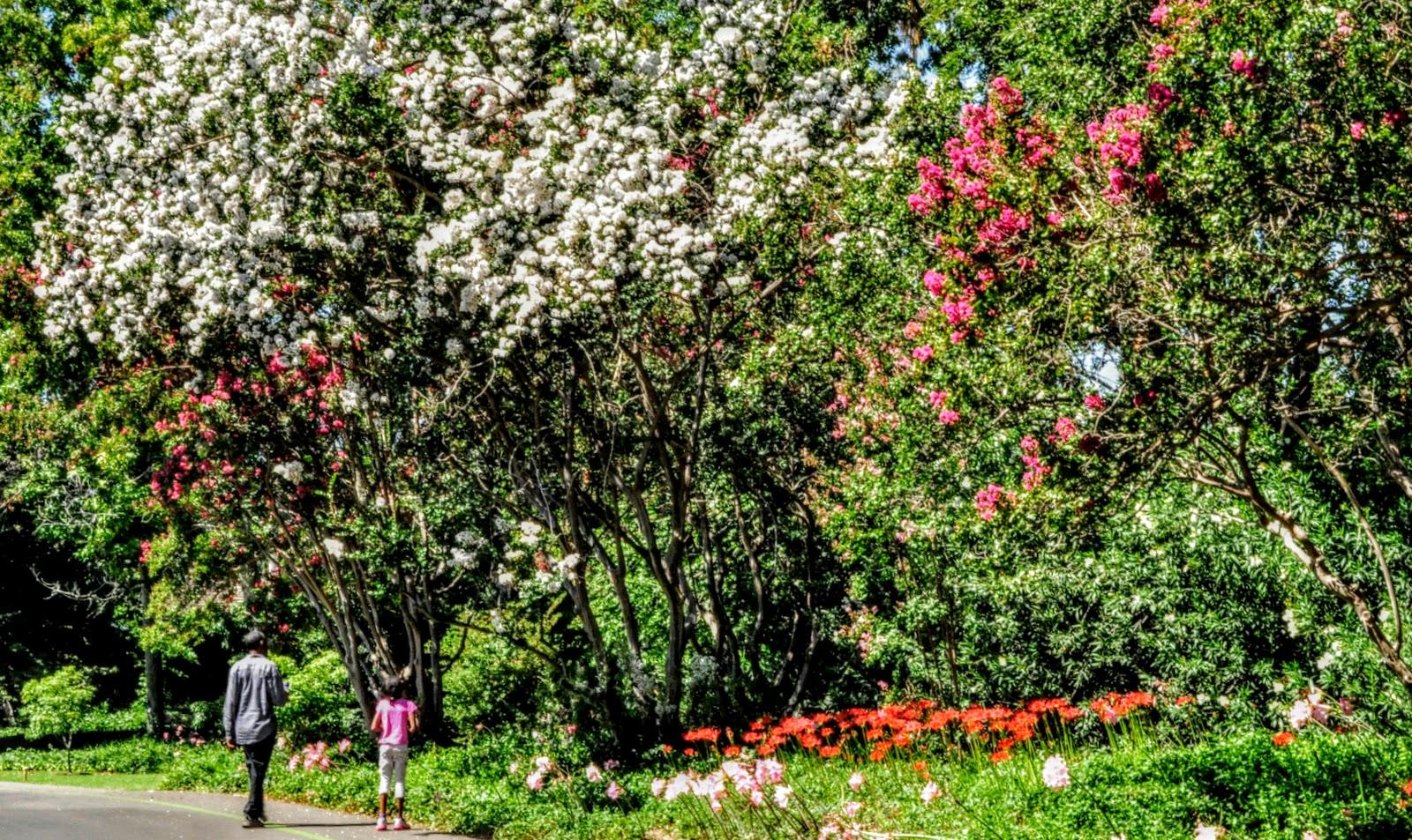 L.A. County Arboretum & Botanic Garden Plant Info: Trees For L.A. \'s ...