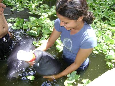 Iquitos y alrededores, selva peruana, como ir a la selva Peru