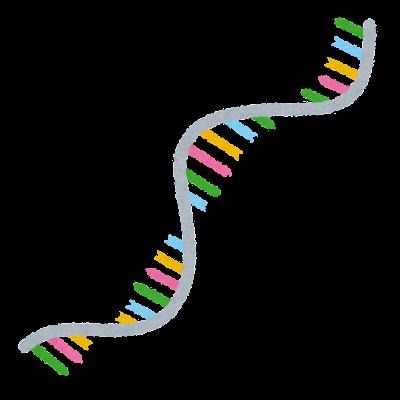 RNAのイラスト