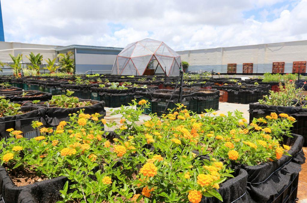 98a1993545f Primeiro Terraço Verde de Horta a utilizar a bio otimização no Nordeste já  registra a produção mensal de 4.200 quilos de adubo utilizados em 500  células de ...