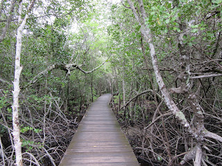 mangrove karimunjawa jepara