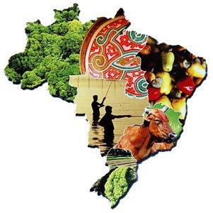Resultado de imagem para a educação ambiental no brasil